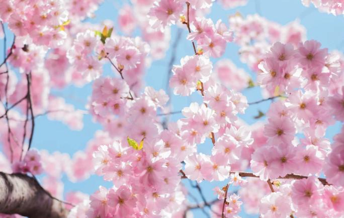 【2019年4月】韓国の美容整形外科が実施する日本カウンセリング会まとめ